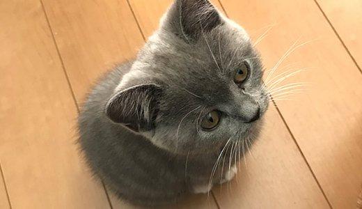 子猫のモモはジャンプ力が低い