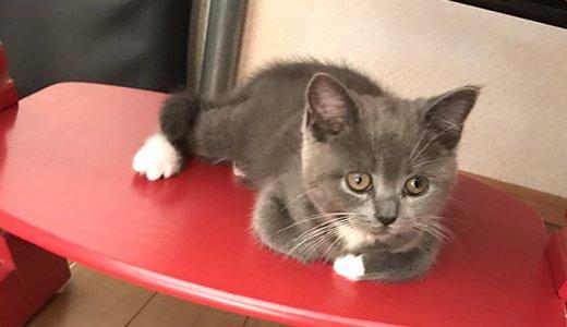 キッズチェアがお気に入りの子猫モモ