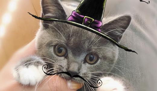 「ハロウィンにゃんこ」猫コスプレに挑戦!