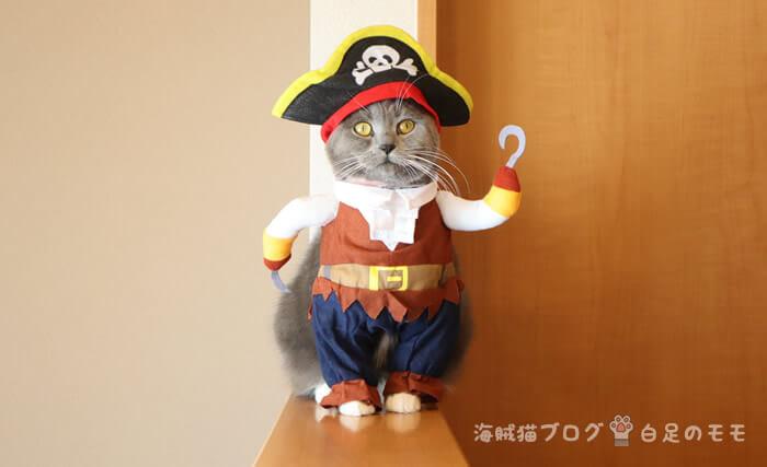 海賊猫白足のモモ