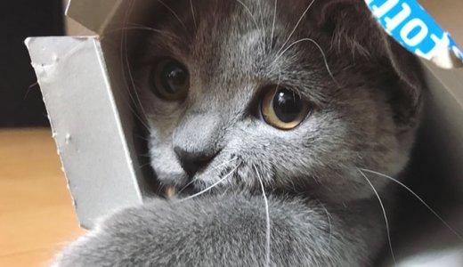 猫はティッシュ箱もおもちゃになる