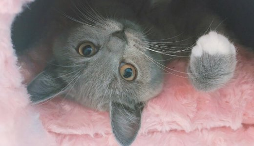 子猫だけどジャンプ力の高さが出てきた!?