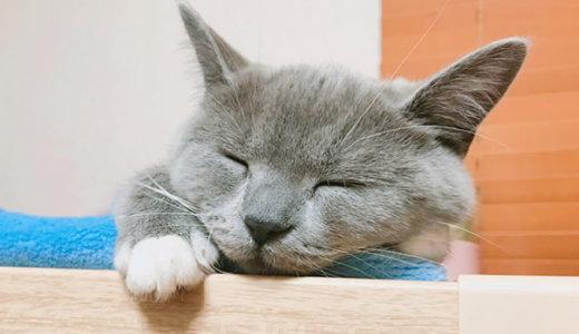 インスタの2018ベストナインを猫アカウントでやってみた