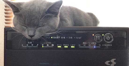 猫アレルギー対策 空気清浄機