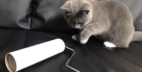 猫アレルギー対策 コロコロ