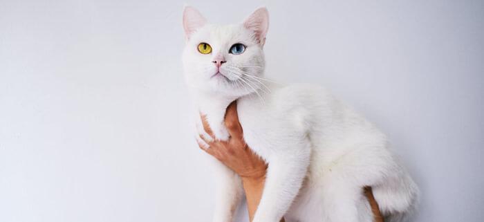 猫アレルギー対策として短毛を選ぶ