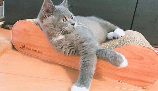 猫の爪とぎ対策におすすめはこれ!