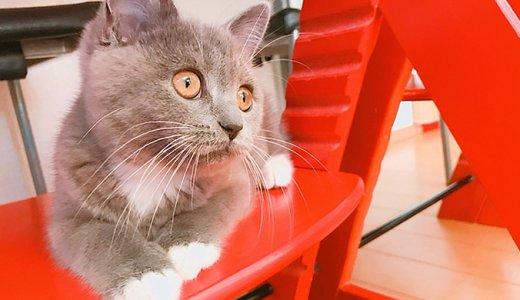 テーブルに猫を乗せないようにするしつけとは?