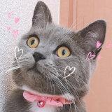 カメラアプリ「SNOW」に猫用認識スタンプ機能が追加!