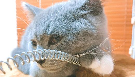 猫のキャットタワーのおすすめの寝方とは!?