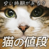 猫 値段 安い時期