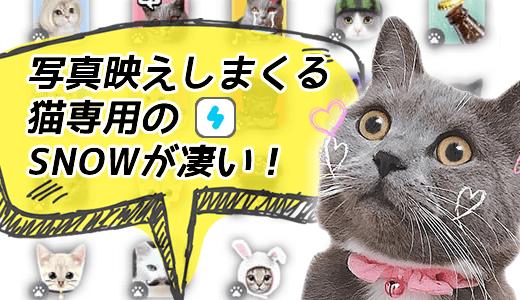 猫用アプリ SNOW