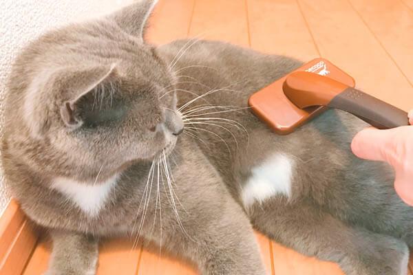 猫アレルギー対策 ブラッシング