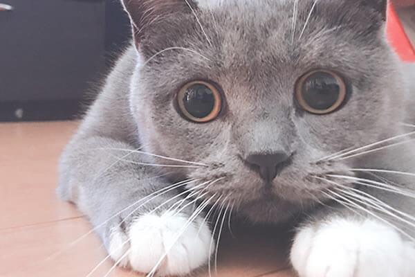 猫 黒目 大きさ