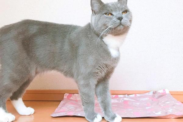 猫 夏バテ フローリング