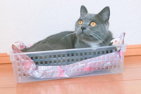 100均 猫のベッド プラカゴ