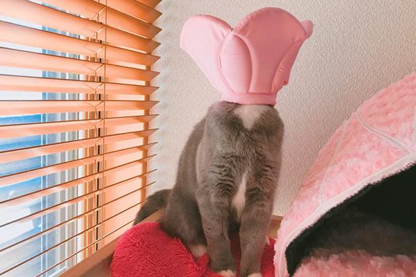 猫 避妊手術後 性格が変わる