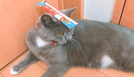 夏の猫おやつ「ちゅーるアイス」は中毒に!