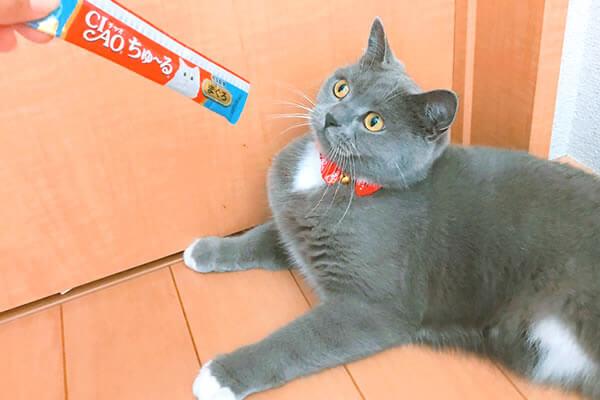 ちゅーるアイス 猫 中毒