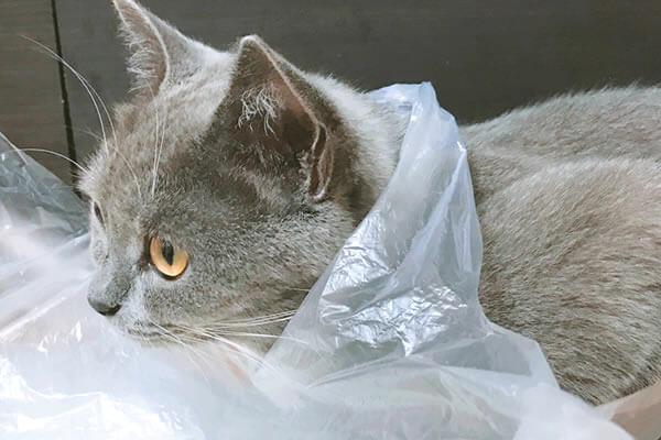 猫 ビニール袋 好き
