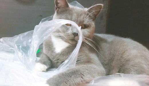 猫はビニール袋のカサカサ音が好き!