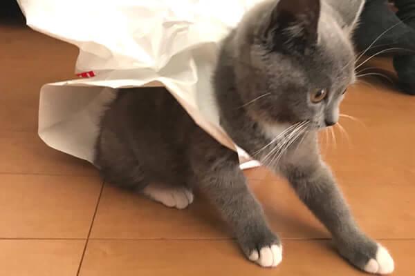 猫 ビニール袋 取れない