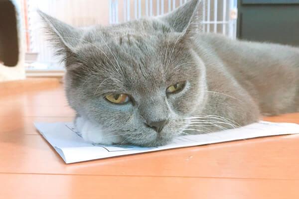 猫 紙の上 好き