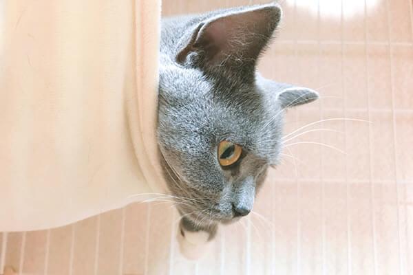猫 ケージ ハンモック