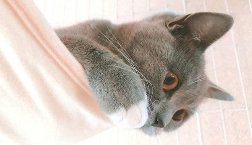 猫のケージの大掃除!掃除しやすさは重要なポイント!