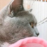猫 毛布 寝る