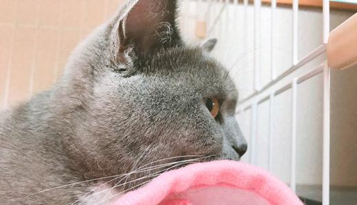 猫が丸くなって寝るのは寒い証拠!?