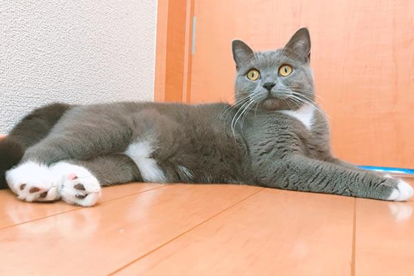 ちゅーる スープ 猫