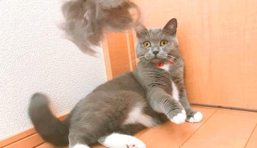 ブラッシング嫌いな猫の初ファーミネーターの反応は!?