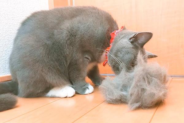 ファーミネーター猫用で抜けた抜け毛