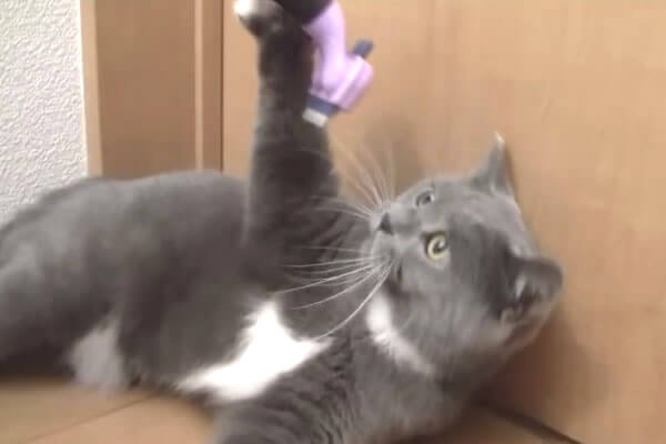猫 ファーミネーター 反応