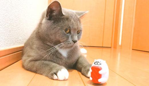 偽クーナッツ?スシローのだっこずしで遊んでみた猫|ブリティッシュショートヘア