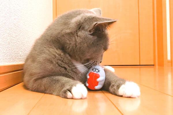 偽クーナッツ 猫 スシローだっこずし