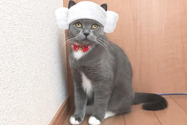 SNOW 猫用 スタンプ 追加