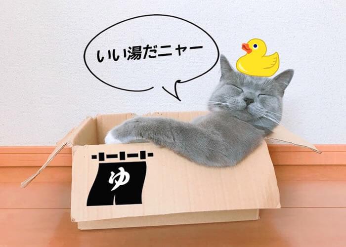 猫 箱 好き お風呂