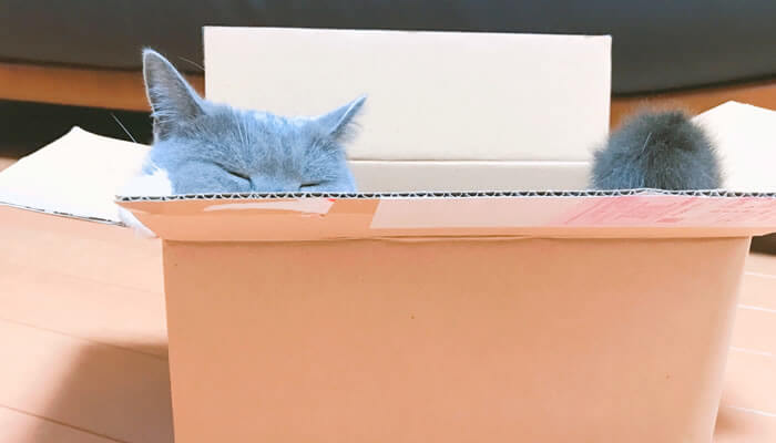 猫 箱 好き