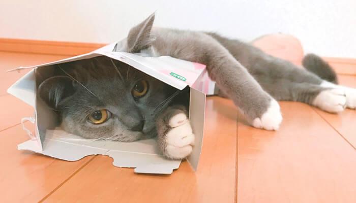 猫 ティッシュ箱 好き