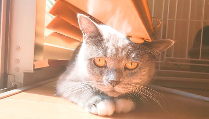 ニャルソック 夢中 猫