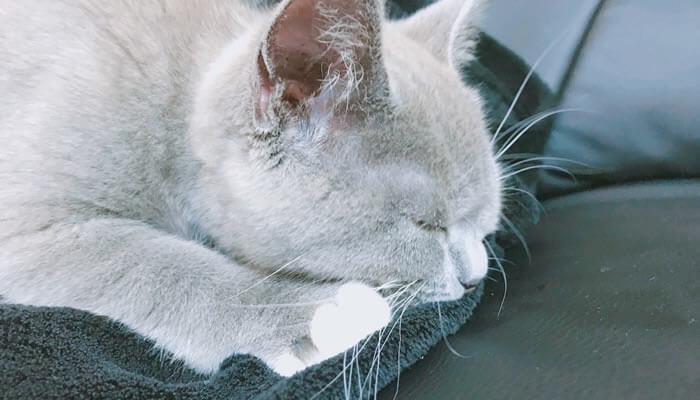 ふみふみ 猫