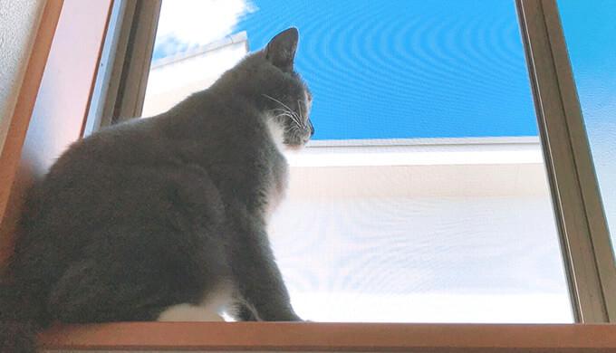 ニャルソックとは 猫窓