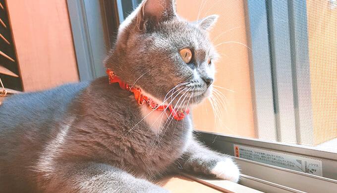 ニャルソック 猫窓の日課