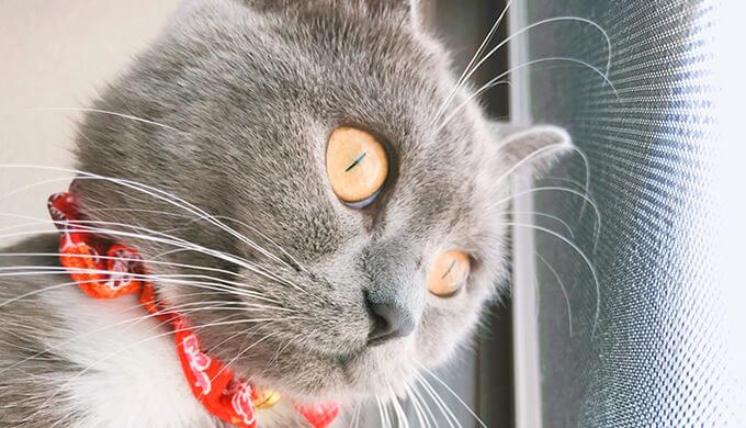 猫窓 窓際が好きな理由
