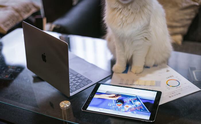 ペット 猫の保険