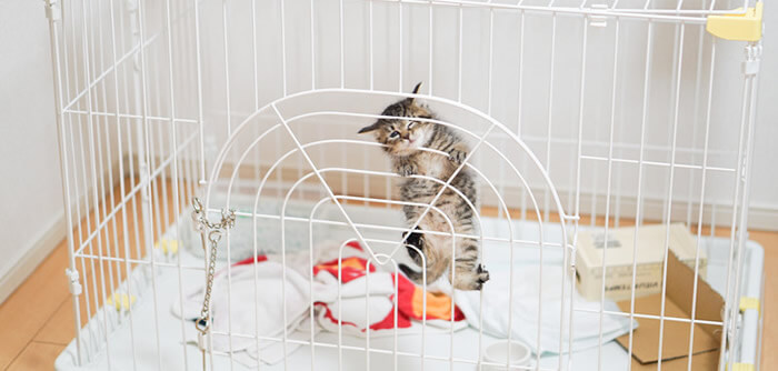 ネコの管理方法