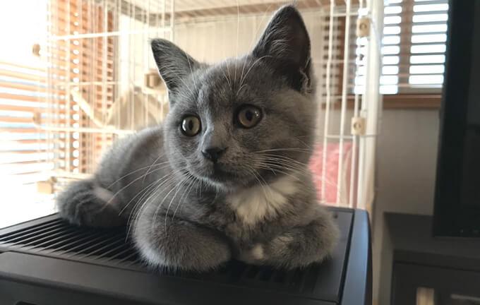 香箱座り 子猫でもする