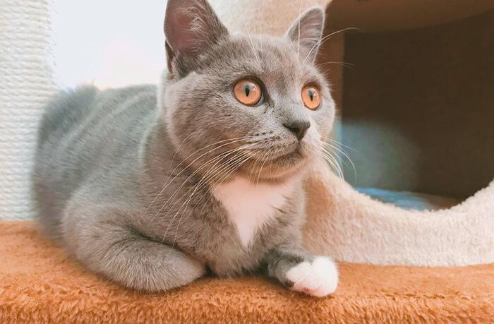 香箱座り 猫の気持ち